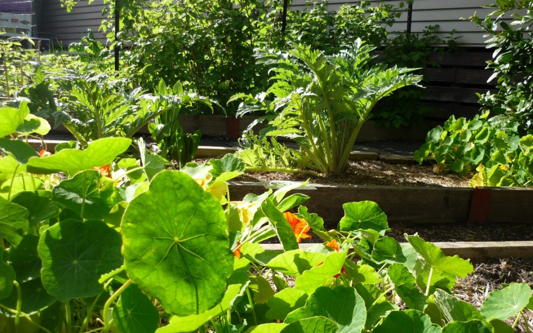 Our Veggie Gardens are looking Fabulous!